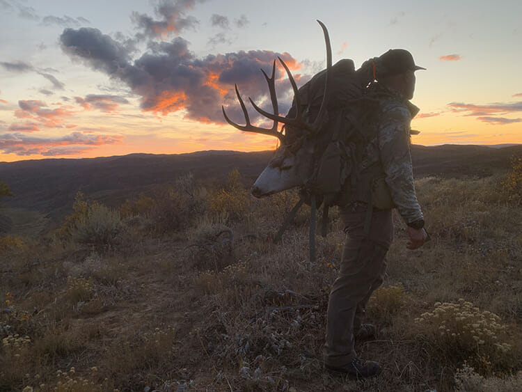 Packing out buck at sunset